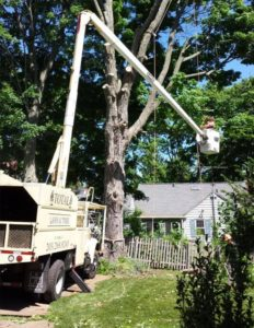 Total Lawn Amp Tree Of Trumbull Ct Landscaping Tree